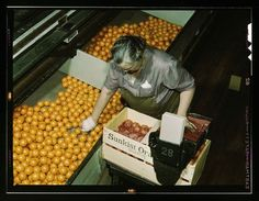 worker packing oranges at a packing plant