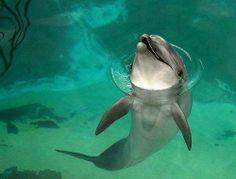 Beautiful dolphin :)