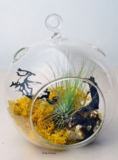 Hanging glass orb terrarium with air plant, sea fan, and yellow reindeer moss by Pink Serissa