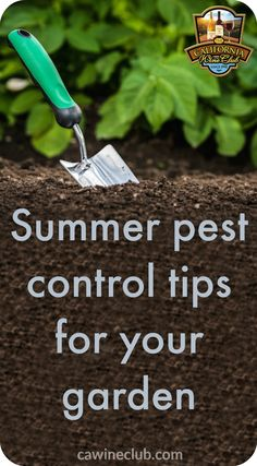 Summer Pest Control Tips for Your Garden from Viticulturists