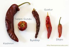 Different varieties of chillies used in India. Kashmiri Red Chilli , Guntur, Byadagi, Gundu and Dhani.