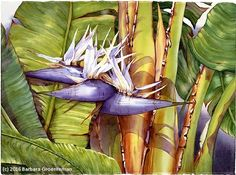 A Bird in Paradise by Barbara Groenteman Watercolor ~  x