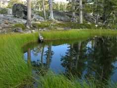 The Magicians Nephew, Wilderness, Pond, Golf Courses, Water Pond, Garden Ponds