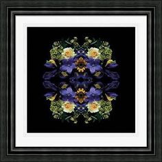 Alyson Fennell Framed Fine Art Photographic Prints Flower Photographs 6 Designs