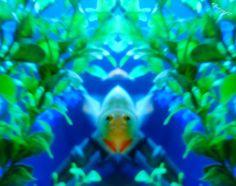 ✧☽ Tank splotches 'Aqua Neeko' ☾✧ #bohemefithome #goldfish Goldfish, Panda, Butterfly, Pets, Pandas, Bow Ties, Panda Bear, Butterflies