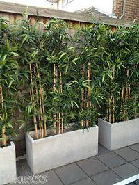 Amenagement Bois Bambou Planter Pour Decor