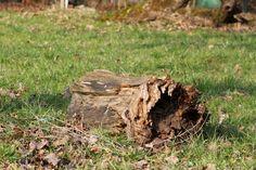 2012-01-22: tree stump