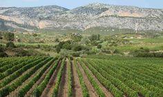 Sardinia wine route: top 10 guide