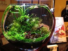 all natural complete ecosystem terrarium aquarium #AquariumTanksIdeas