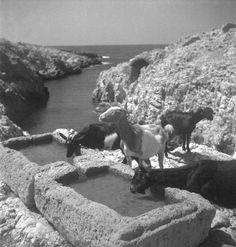 René Zuber et Roger Leenhardt - EN CRETE SANS LES DIEUX,1934. Crete, French Photographers, Water, Outdoor, God, Gripe Water, Outdoors, Outdoor Games, The Great Outdoors