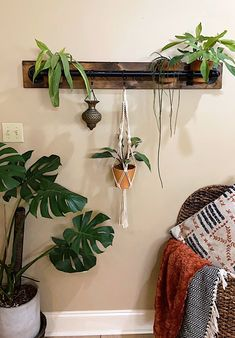 Online Nursery, What Is Miss, Curious Kids, Rule Of Thirds, Home Again, Monstera Deliciosa, Rare Plants, Plant Shelves, Plant Design