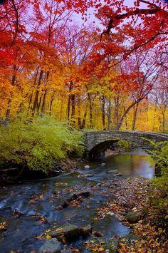 Herfst in het bos met bruggetje