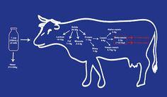 Monash University Low FODMAP Diet: A1 vs A2 milk – What's the big deal? Link: http://fodmapmonash.blogspot.com.au/2016/06/a1-vs-a2-milk-whats-big-deal.html