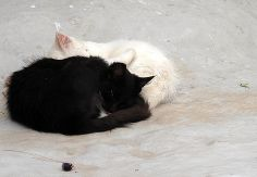 Black and white Cat Sleeping Fine Art Print by GrayTabbyCat, $12.00