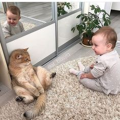 "1,761 Likes, 10 Comments - World Of Funny Cute Cat GAG (@cat_gag) on Instagram: "": First time met with little human . : Küçük insan ile ilk karşılaşmam. . . Photo : From…"""