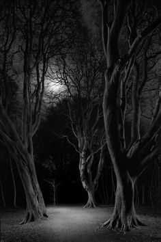 Enchanted forests: British woods and moors at night – in pictures | Art and design | The Guardian Twilight, Gallery Weekend, Still Life Images, Fear Of The Unknown, Danse Macabre, Forest Photography, Chiaroscuro, British Isles, After Dark