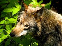 By Haykaz Hakobyan Animals, Animais, Animales, Animaux, Animal