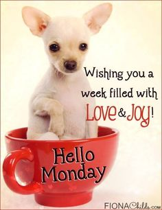 Wishing You A Week Filled With Love And Joy monday monday quotes happy monday monday blessings happy monday quotes… Monday Morning Quotes, Happy Monday Quotes, Happy Monday Morning, Good Morning My Friend, Morning Memes, Monday Humor, Good Morning Good Night, Gd Morning, Afternoon Quotes