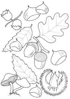 Dibujos para Colorear Naturaleza 8