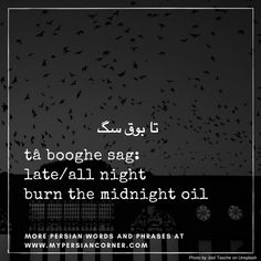 "Persian expressions: ""ta booghe sag"" (literally, until the dog's horn) means ""all night"" or ""burning the midnight oil"""