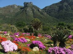 Kirstenbosch is one of the 7 magnificent Botanical Gardens of the World