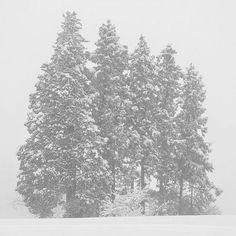 【escapetrail】さんのInstagramをピンしています。 《#雪#雪景色#森#木#冬#冬景色#哀愁#自然#風景#風景写真#景色#モノクロ#ファインダー越しの私の世界#写真好きな人と繋がりたい#snow#forest#tree#winter#melancholy#dream#darkness#nature#landscape#landscapephotography#blackandwhite#blackandwhitephotography#monochrome》