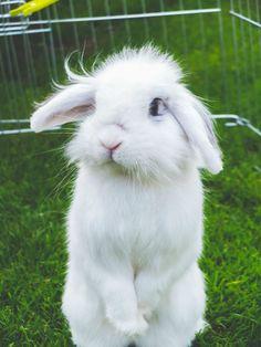 Eric the Bunny, el espelucadito...
