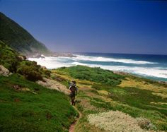 Palms Wilderness, between the Kaaimans River and the Goukama Nature Reserve, South Africa.