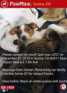Help Spot Is Lost Losing A Pet Dogs Dog Barking