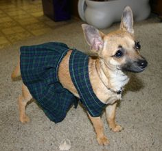 Dog Kilt - HOME SWEET HOME - Knitting, sewing, crochet, tutorials, children crafts, papercraft, jewlery, needlework, swaps, cooking and so much more on Craftster.org