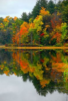 ~~Autumn reflections in a big Pond ~ Finger Lakes, New York Fall Pictures, Fall Photos, Nature Photos, Beautiful Places, Beautiful Pictures, Summer Vacation Spots, Autumn Scenes, Lake George, Amazing Nature