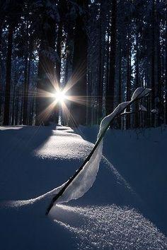 Impresionante resplandor de la luz que nos forma una estrella brillante.