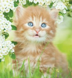 Cat App, Cats, Kittens, Flowers, Weather, Animals, Dreams, Cute Kittens, Gatos