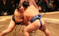 El sumo es un deporte tradicional de Japón en el cual dos peleadores, llamados rikishi, se enfrentan dentro de un ring circular llamado dohyo. El ganador del combate es aquel que logra sacar a su contrincante de este círculo o derribar a su contrincante dentro del ring.existe un evento cúspide dentro del sumo en el cual se reúnen los mejores peleadores, se trata de los honbasho. Eventos originados en 1958,se realizan 6 de ellos al año, cada uno con duración de 15 días
