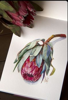 rysunek Entries feed for wire_ru Protea Art, Watercolor And Ink, Watercolor Flowers, Watercolor Paintings, Watercolors, Art Floral, Australian Native Flowers, Guache, Art Graphique