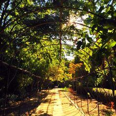 Real Jardin Botanico, Madrid.  The Royal Botanical Gardens