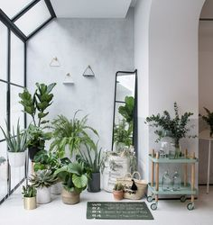 plant filled home decor