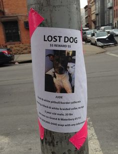 7 Dos and Don'ts for Making a Lost Dog Flyer | Dogster