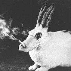 rabbit smoking - Hideous Archaic experiments still being carried on by R.J. Reynolds and Phillip Morris Tobacco. Not even required by law. Smoke forcibly pumped into animals lungs for hours every day. Hair falling out, Covered in tumors, eyes full of puss. PLEASE SIGHN PETITION
