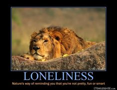 Funny demotivational posters to brighten your Monday - Animal Love Quotes, Top Love Quotes, Love Quotes Funny, Love Life Quotes, Nike Inspirational Quotes, Religious Motivational Quotes, Motivational Monday, Feeling Special Quotes, Special Love Quotes