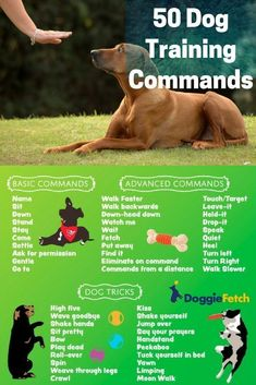 Having a trained #dog isn�t the same as having a balanced dog, but if your dog knows a few basic #commands, it can be helpful when tackling problem behaviors � existing ones or those that may develop in the future. #DogTricks