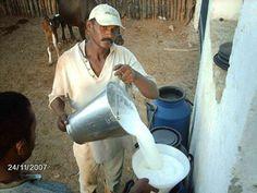No Brasil nós dizemos Vida na Roça em vez de Vida no Campo. Olha o leite fresquinho, ainda quentinho.