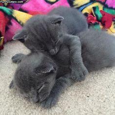 Kitten Cuddlers