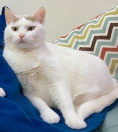 Roxy Cat | Pawshake