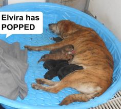 ELVIRA AND PUPPIES located in Elizabethtown, NC has 3 days Left to Live. Adopt him now!