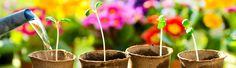In horto ist ein neu gegrundetes Garten- und Landschaftsbau Unternehmen in Hurth bei Koln mit Schwerpunkt: Terrassenbau, Pflasterarbeiten, Rasen und Zaunanlagen.