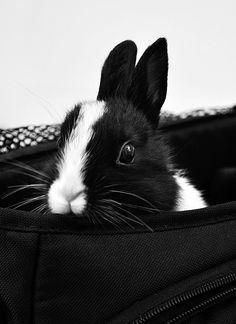 black and white   ...........click here to find out more     http://googydog.com