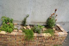 Site Archéologique, Plants, Gardens, Roman, Flora, Plant, Planting