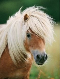 the cutest pony ever....reminds me of Sugar