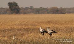 Passage To Africa - Busanga Plains, Zambia